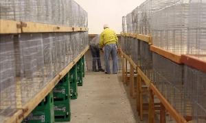 Virus H5N8 verhindert Geflügelausstellung