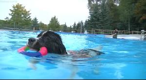 Hundeschwimmen in Penig