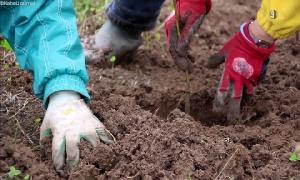 Pflanzung 2000 neuer Laubbäume