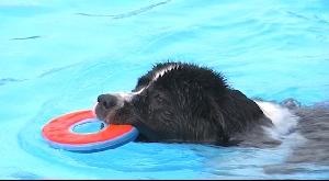 Hundeschwimmen im Freibad Penig