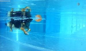 Hundeschwimmen im Sonnenbad Rußdorf