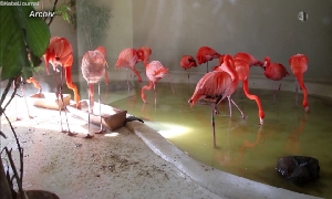 Winterhaus des Flamingolandes