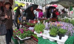 Frühjahrs- und Pflanzmarkt