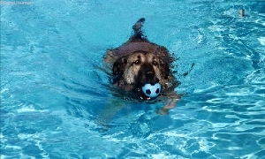 Hundeschwimmen zum Saisonende