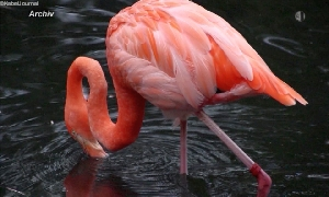 Amerika-Tierpark
