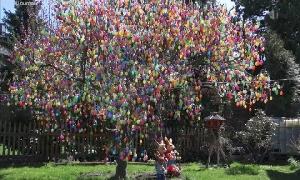 Rekordverdächtiger Eier-Baum