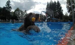 6. Peniger Hundeschwimmen